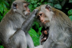 Mongkey-Forest-Bali